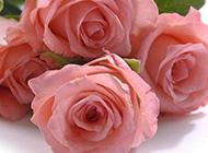 粉玫瑰图片唯美背景素材欣赏
