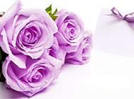 唯美紫色玫瑰背景素材欣赏