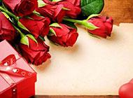 红玫瑰背景图漂亮迷人