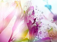小清新手机壁纸 春日鲜花美景