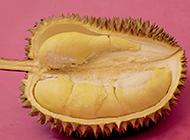 熱帶著名水果榴蓮圖片素材