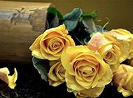 黄玫瑰浪漫背景素材图片