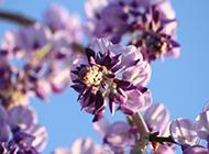 最美紫藤花图片令人陶醉