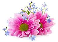 粉色写意向日葵图片素材