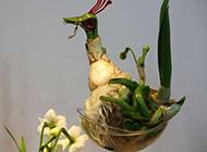 充满艺术感的水仙花图片