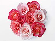 一束玫瑰花图片素材