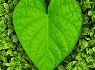 心形叶子绿色植物图片素材