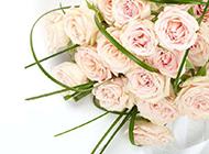 高清的粉玫瑰花束图片素材