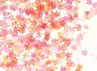 唯美粉色枫叶背景图片素材
