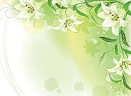 纯洁的白色百合花图片素材