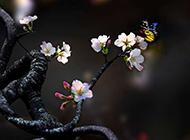 古韵典雅的桃花图片