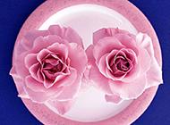 粉玫瑰高清唯美圖片素材