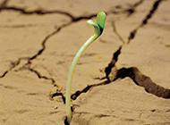破土而出的绿色植物图片