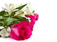 素雅美丽的情人节唯美花束图片