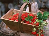 红彤彤的草莓水果图片