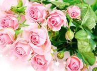 唯美艷粉玫瑰圖片素材