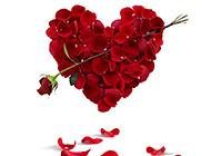 一箭穿心玫瑰花艺术图片