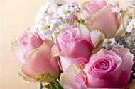 花团锦簇的鲜花高清大图