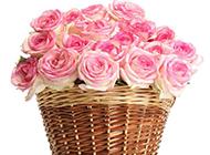 一篮子的粉玫瑰清新图片
