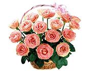 粉色玫瑰图片个性淡雅背景素材