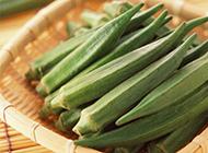 绿色秋葵高清图片