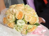33朵香槟玫瑰图片代表三生三世