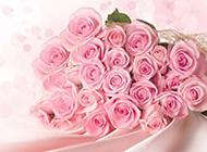 唯美淡雅的粉玫瑰背景图片