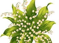 清新的鈴蘭花手繪圖片素材