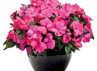 一盆鲜艳的花朵图片