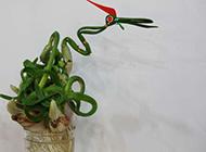 水仙花艺术观赏盆栽图片