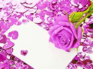 情人節卡片上的紫玫瑰圖片