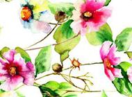 植物图片水彩素描鲜花背景