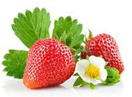 刚采摘的草莓图片素材