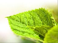 绿色植物背景素材素雅清淡