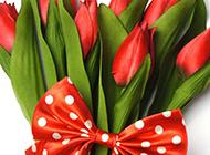 红色郁金香超清花朵素材