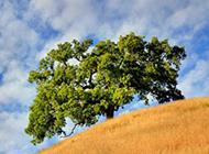 大自然草原大树图片素材
