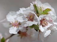 冬日暖阳花朵素材