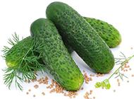 新鲜的青瓜蔬菜图片