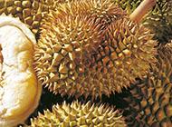营养价值高的榴莲水果图片
