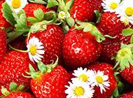一堆洗好的草莓超清图片