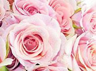 一束粉玫瑰花高清图片欣赏