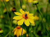 秋天山间黄色野菊花图片