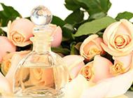 嬌媚芳香的香檳玫瑰圖片