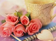 娇艳美丽的粉色玫瑰图片赏析