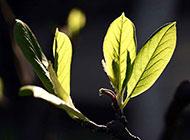 清新绿色树叶植物图片素材