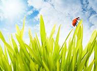 七星瓢虫恋上绿色植物图片