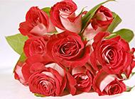 素雅唯美的红玫瑰花束图片