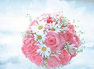 浪漫情人節主題粉玫瑰精致背景圖片