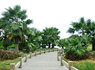 綠道的棕櫚樹圖片欣賞