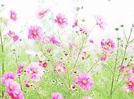 唯美的粉色花朵图片素材
